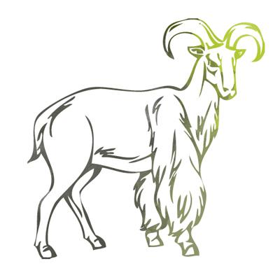 Auf Barbary-Schafjagd mit Interhunt