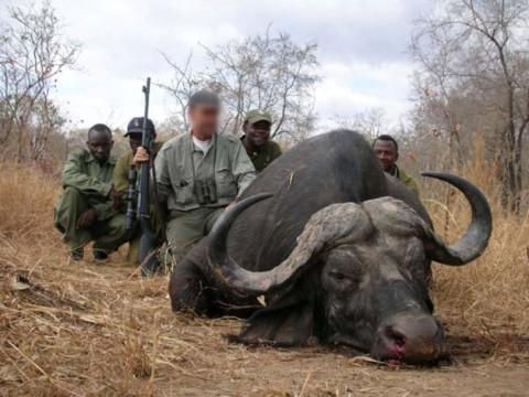 Erfolgreiche Jagd auf kapitalen Kaffern Büffel - Tansania - Interhunt - jagen weltweit