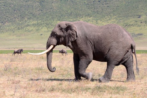 Jagd auf Elefant in Tansania - Interhunt - jagen weltweit