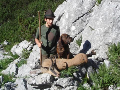 Jagd auf Gams in Österreich - Interhunt - jagen weltweit