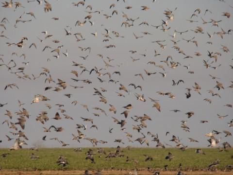Unvergessliche Taubenjagd in Argentinien - Interhunt - jagen weltweit