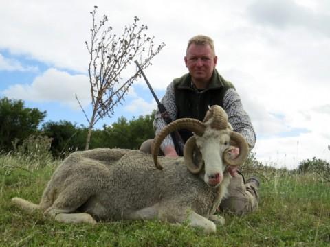 Jagd auf Vierhornschaf in Argentinien - Interhunt - jagen weltweit