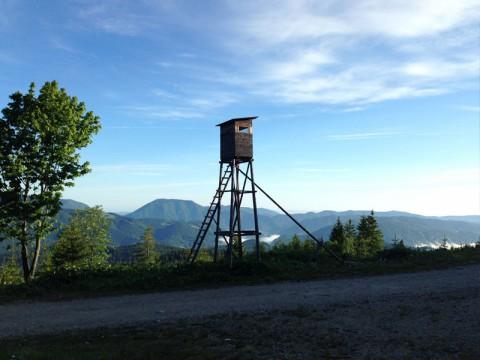 Jagen vom Hochsitz in Österreich - Interhunt - jagen weltweit