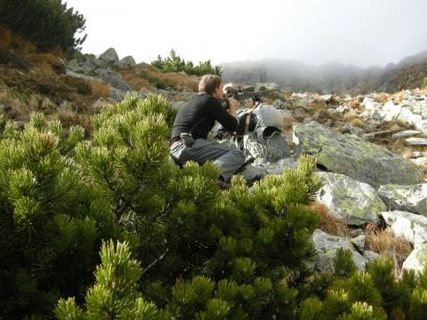 Jagen auf Schalenwild in Österreich - Interhunt - jagen weltweit
