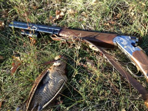 Wilde Schnepfen in Kroatien - Interhunt - jagen weltweit