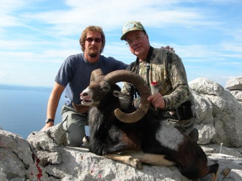 Muffelwidder Jagd an der Küste von Kroatien - Interhunt - jagen weltweit