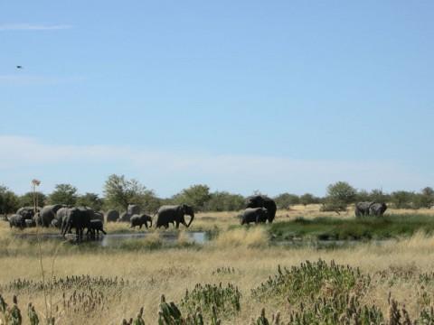 Elefanten Jagd im Caprivi - Interhunt - jagen weltweit
