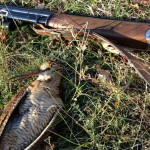 Wild Woodcock hunt in Croatia - Interhunt - hunting worldwide