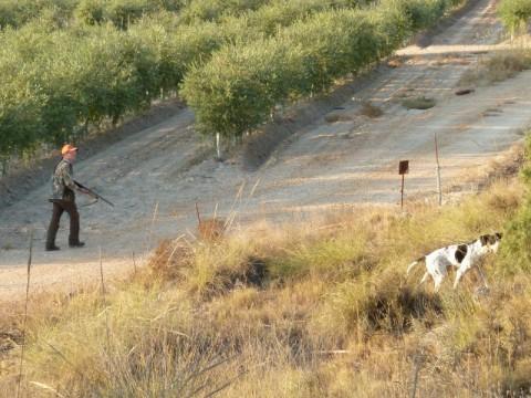 Flugwildjagd mit Hunden auf Wachteln in Kroatien - Interhunt - jagen weltweit