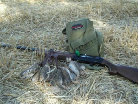 Jagd auf Wilde Wachteln in Kroatien - Interhunt - jagen weltweit