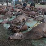Streckenlegung nach Monteria - Interhunt - jagen weltweit