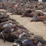 Strecke mit Muffel- und Rotwild - Interhunt - jagen weltweit